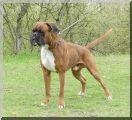 Hunter vom Hollermorgen Wurftag: 20.01.2013 Zuchtbuchnummer: 238258